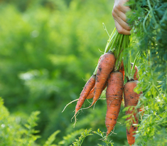 跟著節氣玩蔬食