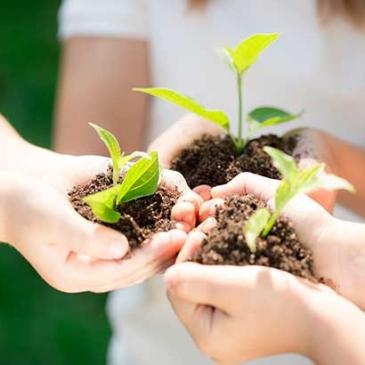 埋下希望、種下愛-幸福種子盆栽