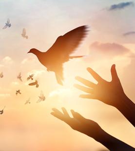 賞鳥與生活